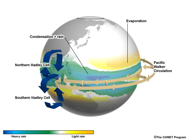 tropical circulation and response essay Heavy rain from tropical cyclones or tropical depressions can often reach australia's more southerly latitudes where the rainfall is a major source of water for the country's inland river and groundwater systems.